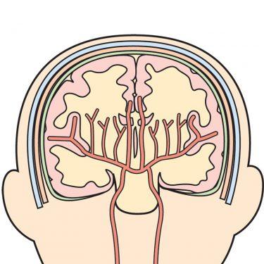 「脳だって老化する」自分のやりたいことができなくなる理由