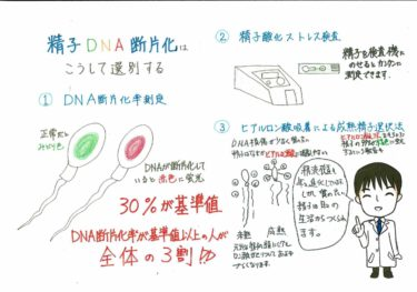 精子DNA断片化の測定方法