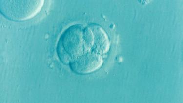 「胚」はモノではなく命